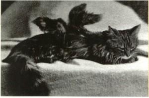 Gato alado-Inglaterra 1899