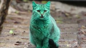 Gato verde 1.