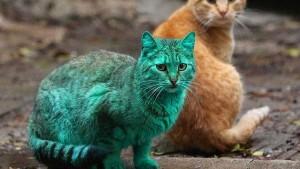Gato verde 2.