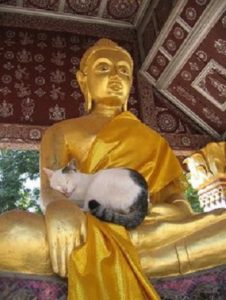 Gato y Buda 1.