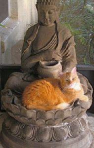 Gato y Buda 2.