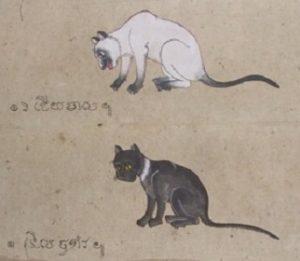 Tamra Meow 2.
