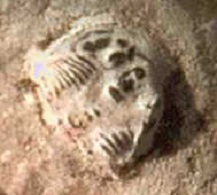 Detalle Trilobite talón.